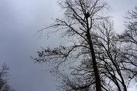 Muže (†56) zasáhla při kácení stromu do hlavy větev: Nepomohly ani léky do kostní dřeně