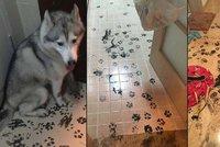 Husky udělal z bytu trosky: Nechali ho 3 hodiny o samotě