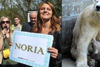Lední medvídě v brněnské zoo se jmenuje Noria, rozhodla tenistka Šafářová