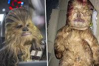 Narodil se malý Chewbacca: Tvor vypadá jako postava ze Star Wars
