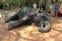 Smutný pohled: Slonice zemřela vyčerpáním. Nutili ji vozit turisty i ve vedrech