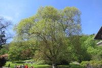 Znáte nejkrásnější strom v Praze 4? Vyfoťte ho do soutěže