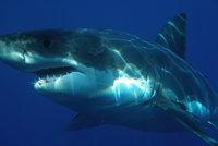 Žralok v Egyptě ukousl plavci nohu. Úřady zakázaly na dva týdny koupání v moři