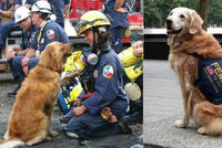 Zemřel hrdina z 11. září! Fence Bretagne selhaly ledviny