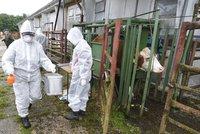 Po zdechlinách má Polsko další problém: U českých hranic se objevila nemoc šílených krav