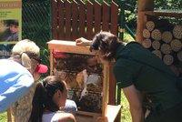 Pražský med je jeden z nejlepších v Česku: Děti ho v lese baštily tak, že nestačil