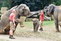 Sloni zapózovali fotografovi: Vznikly krásné 360 stupňové fotografie Maxe, jeho mámy a březí tety Tamary