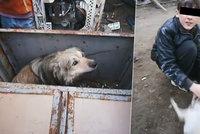 Šokující zpráva ze Slovenska: Romové prodávali psy na maso Vietnamcům