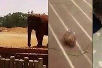 Slon v zoo zabil školačku (†7): Hodil po ní kámen a zasáhl ji do hlavy