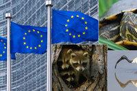 Mývalové, vrány i želvy zmizí. EU nařídila likvidaci, nepřežijí ani v zoo