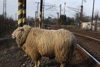 Beran zastavil vlaky u Karlštejna: Po pádu ze skály strhl trolej