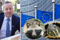 """Kastrace mývalů i ničení vajíček. Zoo marně čekají na výjimku z bruselského """"seznamu smrti"""""""