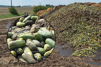 Takhle se plýtvá jídlem v Česku: Tuny okurek skončily na hnoji. Rozežranost nebo lenost?