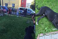 Polil psa kyselinou, protože moc štěkal: Doga přežila jen zázrakem