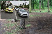Děti v lese brutálně zmlátily houbaře: Vysypaly mu košík a poštvaly na něj psy!