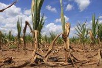 Sucho trápí i Německo. Zemědělci spočítali škody na závratnou částku, čekají pomoc