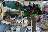 Před 10 lety zemřel lovec krokodýlů! Dobrodruha Steva Irwina probodl rejnok