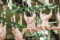 Hnus v bourárně masa na Plzeňsku: V chladírně jim hnily kosti a kuřecí kůže