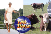 Jirešová zpívala kravám: A skončila v příkopu!