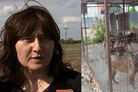 Matka Mirečka (†5), kterého roztrhali na Chlumecku psi: Napadli ho, protože upadl!