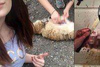 Jen pro otrlé! Studentky brutálně týraly zvířata. Smrt vysílaly online