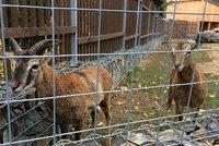 Vánoce o týden dřív v chuchelském zookoutku. Přijďte obdarovat lesní zvířata