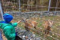 Hostivařský lesopark má novou Divokou zahradu: Obývají ji hendikepovaná zvířata