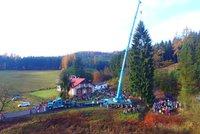 Vánoční strom pro Prahu pokáceli v Podkrkonoší. Je za ním pozoruhodný příběh