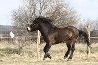 Splašený kůň, který srazil dítě (3): Majitel byl opilý, hrozí mu tři roky vězení!