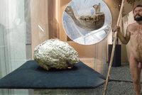 Neandrtálská žena spadla do vřídla a utonula: V Brně vystavují její zkamenělý mozek