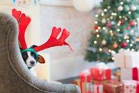 Udělejte pod stromečkem radost svým domácím mazlíčkům