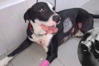 Strážník na Štědrý den postřelil psa, který při kontrole squatu v Košířích zuřivě štěkal