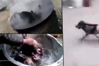 Od 18 let: Tyrani vařili psa zaživa, pak z něj trhali srst. Zmrzačené zvíře uteklo