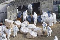 Ptačí chřipka se šíří Českem: Veterináři hlásí druhé ohnisko, nemoc zasáhla Benešovsko