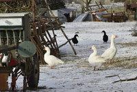 Ptačí chřipka svírá Česko: Osmé ohnisko našli na jihu Čech