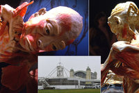 Vypreparovaná lidská těla v Holešovicích: Výstava ukáže i játra s rakovinou