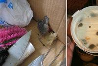 """Myši, plíseň a náhražky. Další """"restaurace hrůzy"""" zavřeli inspektoři"""