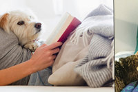 Pes v posteli na nás má pozitivní vliv! Přečtěte si proč