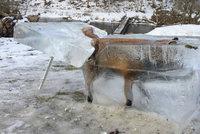Zamrzla vám Mozilla Firefox? Nebohá liška v ledu hitem internetu!