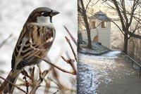 Na Vítkově najdete přes 20 krmítek: Pečivo do nich nepatří, může ptáky otrávit