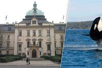 Česko je členem velrybářské komise, ročně za to platí 700 tisíc korun. Proč?