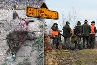 Myslivci v Praze pořádali hon na divočáky: Dvě prasata zastřelili