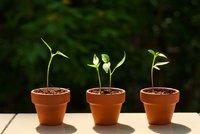 Teď zasaďte semínka! Ušetříte za sazenice paprik, rajčat a okurek