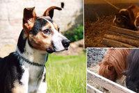 """Týraní psi, poníci, ale i pavouk a had. Stát ročně """"zdědí"""" desítky zvířat"""