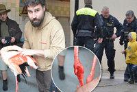 Tragédie v jihlavské zoo: Malí kluci (5, 6 a 8) ukamenovali a ukopali plameňáka!