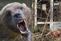 V německé zoo utekl vzácný medvěd: Oblíbeného Tapse museli zastřelit