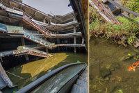 Příroda porazila devolopery: Z opuštěného obchoďáku se stalo akvárko s tisíci rybami!