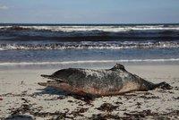 Rybáři masově střílí delfíny. Jsou chamtiví a žerou moc ryb, tvrdí Italové