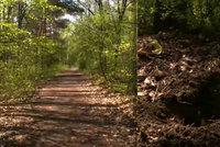 Hrůzný nález v lese: V ilegálním hrobě našli nenarozený plod!