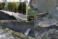 Podél Ďáblického hřbitova vykáceli 46 stromů: Musely ustoupit opravě zdi